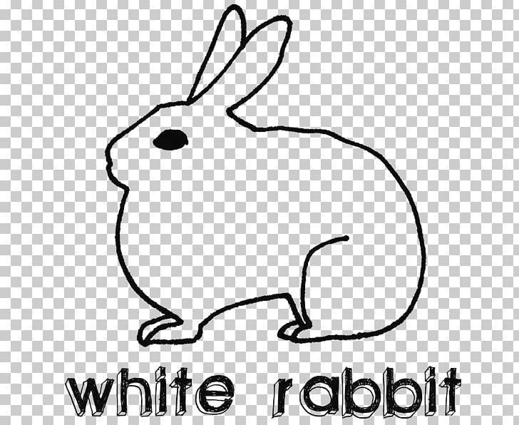 Domestic Rabbit Hare White Rabbit Lionhead Rabbit PNG, Clipart, Animal, Animals, Area, Art Bbs, Artwork Free PNG Download