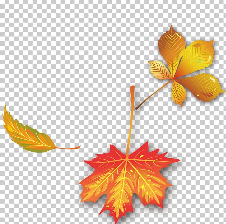 Maple Leaf Autumn PNG, Clipart, Autumn, Autumn Leaves, Autumn Tree, Computer Wallpaper, Deciduous Free PNG Download