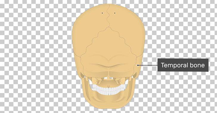 Temporal Bone Skull Mastoid Process Occipital Bone PNG, Clipart, Bone, Jaw, Mandible, Mastoiditis, Mastoid Part Of The Temporal Bone Free PNG Download