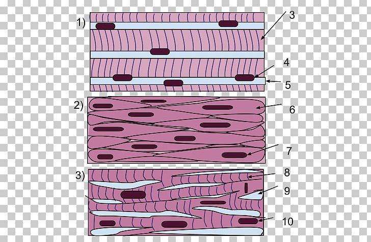 Smooth Muscle Tissue Skeletal Muscle Cardiac Muscle PNG, Clipart, Anatomy, Angle, Area, Biceps, Brachialis Muscle Free PNG Download
