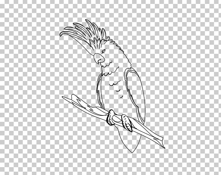 Beak Sketch Finger Drawing Illustration PNG, Clipart, Angle, Arm, Art, Artwork, Beak Free PNG Download