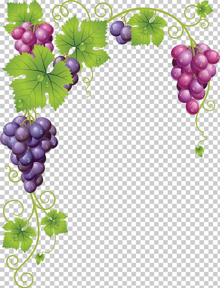 Grapevines Grape Leaves Wine Png Clipart Drawing Flowering Plant Food Fruit Fruit Nut Free Png Download