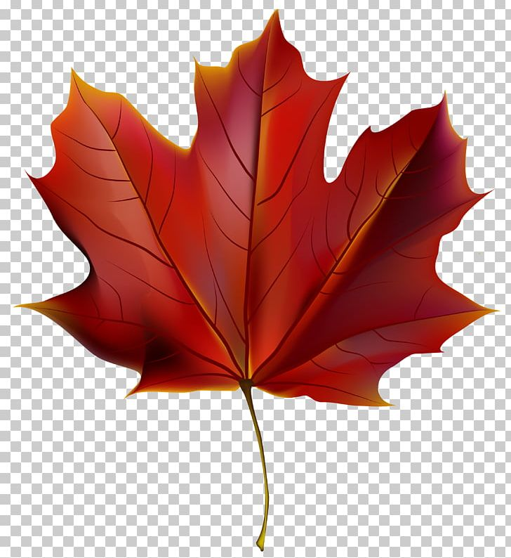 Autumn Leaf Color Red PNG, Clipart, Autumn, Autumn Leaf Color, Beautiful, Clipart, Clip Art Free PNG Download