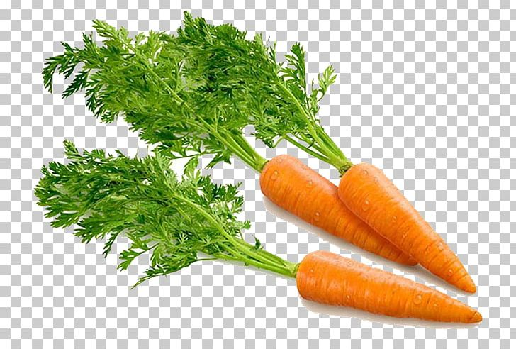 Portable Network Graphics Carrot Computer File PNG, Clipart, Baby Carrot, Carrot, Computer Icons, Diet Food, Download Free PNG Download