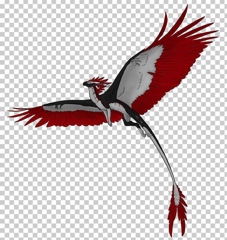 Flight PNG, Clipart, Beak, Bird, Bird Of Prey, Desktop Wallpaper, Display Resolution Free PNG Download