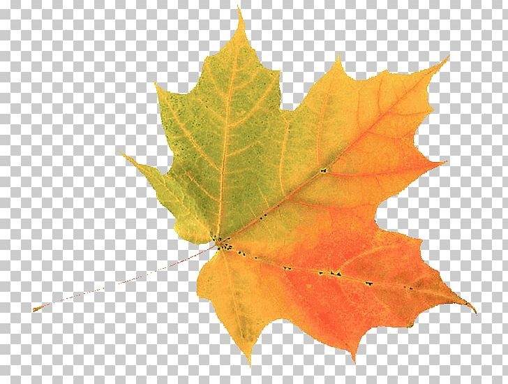 Autumn Leaf Color Green PNG, Clipart, Autumn, Autumn Leaf Color, Autumn Leaves, Cartoon, Color Free PNG Download