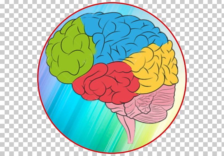 Human Brain Color Human Anatomy Png Clipart Anatomy Area