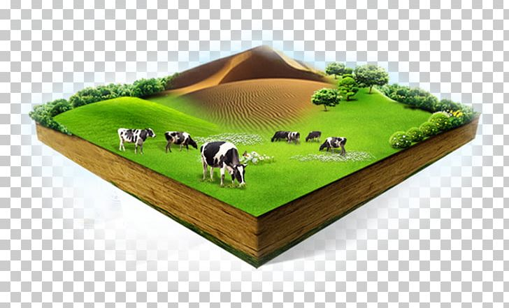 Soured Milk Cattle Organic Food Cows Milk PNG, Clipart, Animals