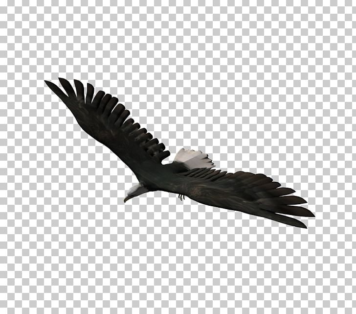 Autodesk 3ds Max  3ds Computer-aided Design EAGLE PNG