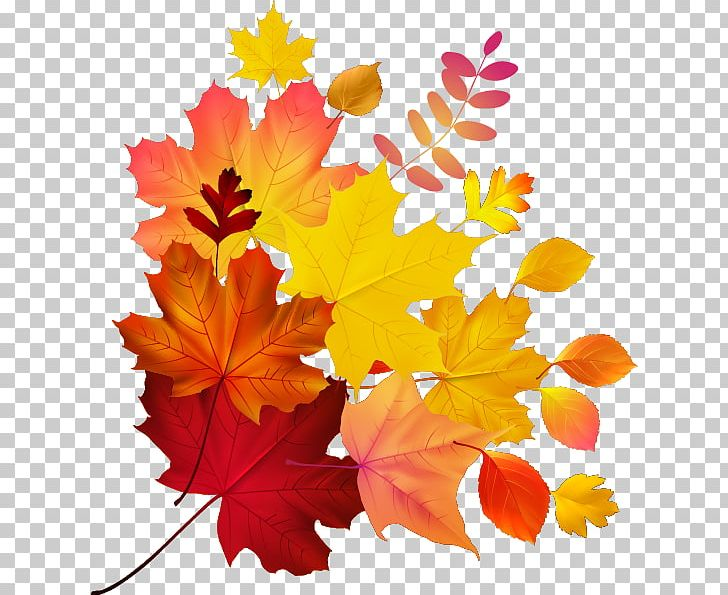 Autumn Leaf Color Maple Leaf PNG, Clipart, Autumn, Autumn Leaf, Autumn Leaf Color, Euclidean Vector, Fall Free PNG Download