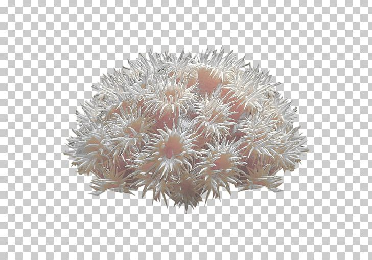 Coral Reef Deep-water Coral Sea Anemone PNG, Clipart, Alcyonacea, Aquatic Plants, Coral, Coral Reef, Coral Sea Free PNG Download