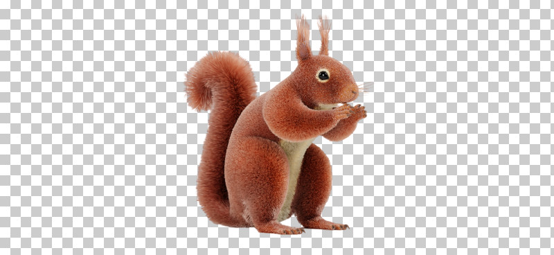 Squirrel Eurasian Red Squirrel Animal Figure Rabbit Rabbits And Hares PNG, Clipart, Animal Figure, Animation, Ear, Eurasian Red Squirrel, Fawn Free PNG Download