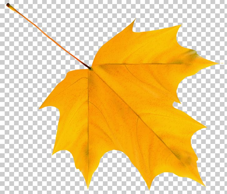 Autumn Leaf Color Yellow PNG, Clipart, Autumn, Autumn Leaf Color, Clipart, Clip Art, Color Yellow Free PNG Download