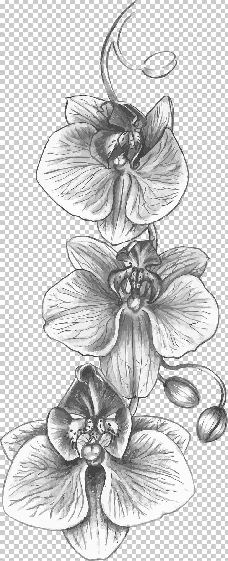 Cattleya Orchids Tattoo Drawing Flower Png Clipart Artwork