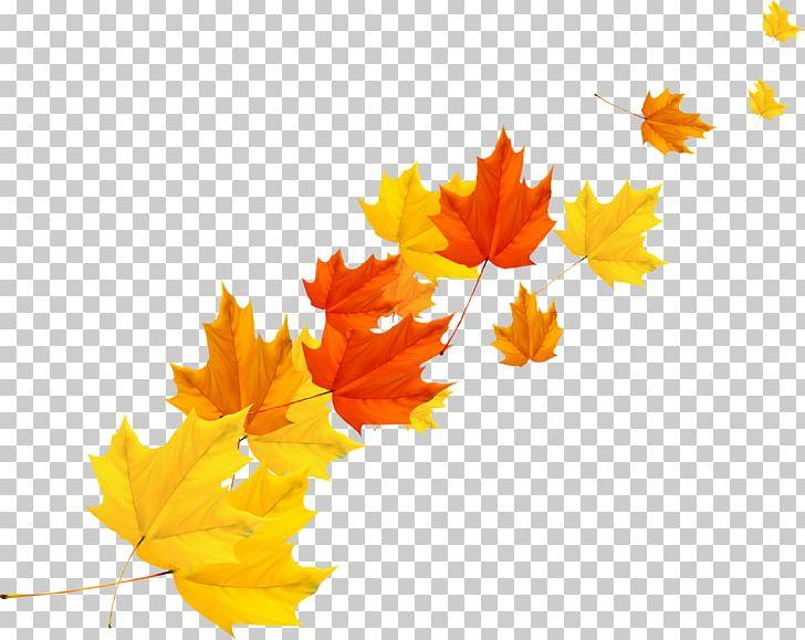 Maple Leaf Autumn PNG, Clipart, Autumn Leaf Color, Autumn Leaves, Autumn Maple Leaves, Autumn Tree, Cartoon Free PNG Download