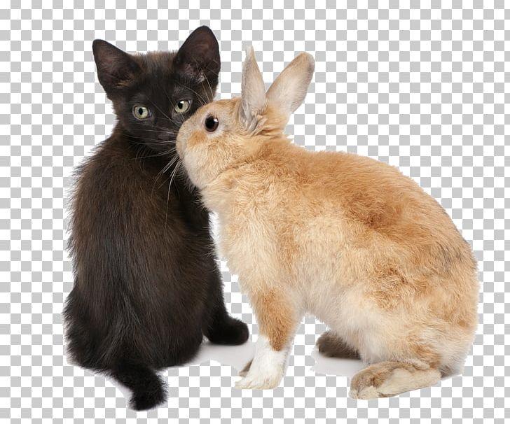 Desktop Kitten Cat PNG, Clipart, Animals, Animation, Cat, Cat Like Mammal, Desktop Wallpaper Free PNG Download