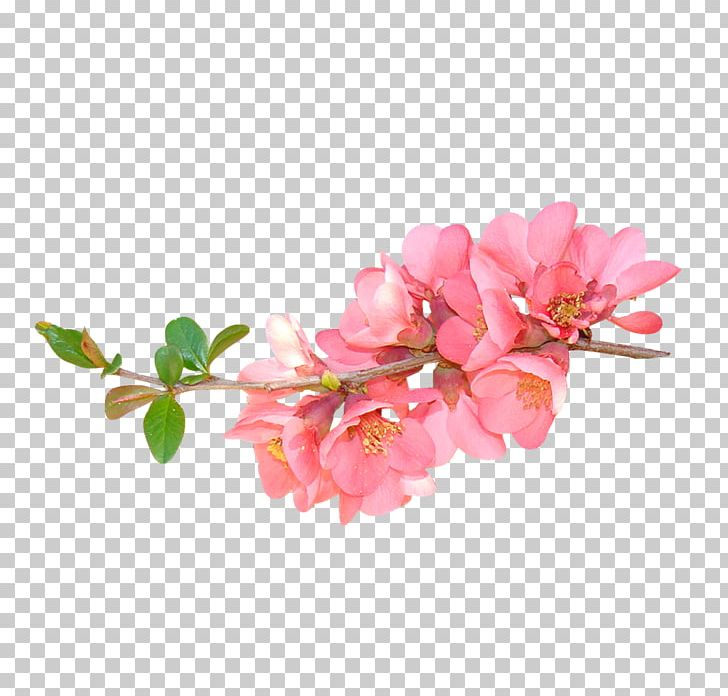 Flower Floral Design PNG, Clipart, Artificial Flower, Blossom, Branch, Cherry Blossom, Cut Flowers Free PNG Download