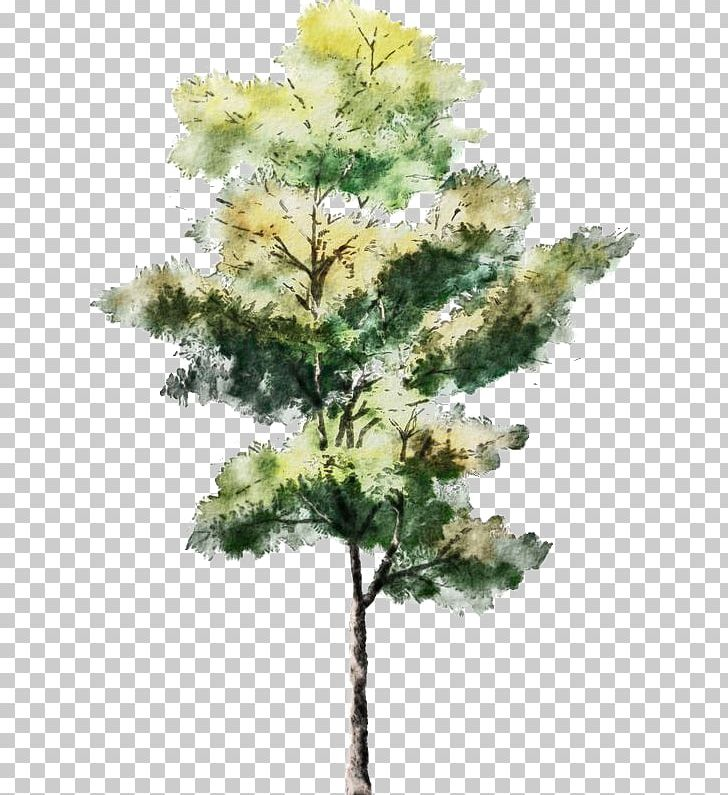 Tree Watercolor Painting Drawing Architecture Sketch PNG, Clipart, Architectural Illustrator, Architectural Rendering, Art, Branch, Cartoon Free PNG Download