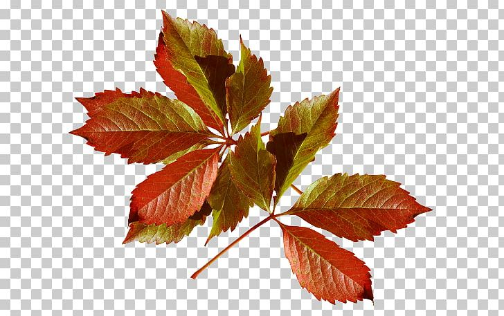 Autumn Leaves Autumn Leaf Color Desktop PNG, Clipart, Autumn, Autumn Leaf Color, Autumn Leaves, Branch, Desktop Wallpaper Free PNG Download