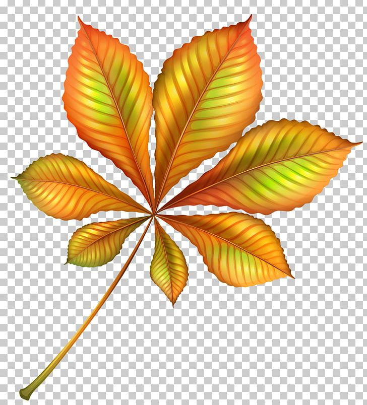 Autumn Leaf Color Autumn Leaf Color PNG, Clipart, Animation, Autumn, Autumn Leaf Color, Autumn Leaves, Clip Art Free PNG Download