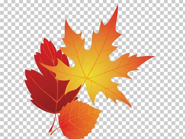 Autumn Leaf Color PNG, Clipart, Autumn, Autumn Leaf, Autumn Leaf Color, Blog, Clip Art Free PNG Download