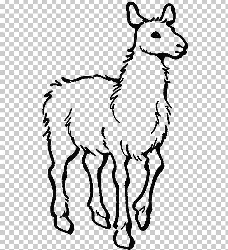 Alpaca Colouring Pages Llama Llama Home With Mama Coloring