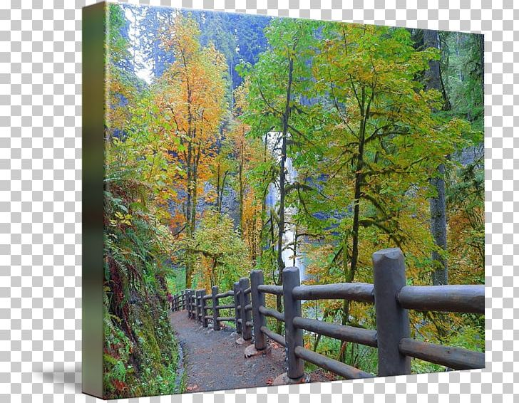 Temperate Broadleaf And Mixed Forest Nature Reserve Larch Gallery Wrap PNG, Clipart, Art, Autumn, Biome, Canvas, Ecosystem Free PNG Download