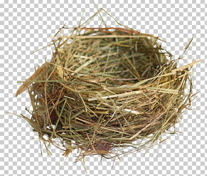 Edible Bird's Nest Edible Bird's Nest Bird Nest PNG, Clipart, Bird, Bird Nest, Birds Nest, Computer Graphics, Decorative Patterns Free PNG Download