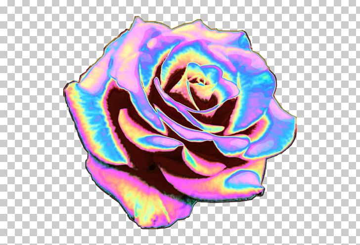 Rainbow Rose Garden Roses T-shirt Cabbage Rose Cut Flowers ... on rainbow flower design, rainbow flower bulbs, rainbow flower weddings, natural pools and gardens, rainbow flower trees, rainbow grass, rainbow flower plants, rainbow flower art, rainbow flower arrangement, rainbow flower tattoos, rainbow colored flowers, rainbow flower roses, philadelphia magic gardens, rainbow photography, rainbow flower cake, rainbow nature, beautiful spring gardens, rainbow flower paintings, rainbow fields, rainbow flower landscape,