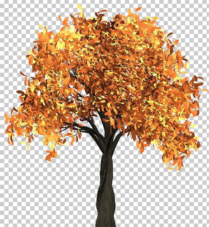 Autumn Leaf Color Tree PNG, Clipart, Autumn, Autumn Leaf Color, Autumn Tree, Branch, Color Free PNG Download