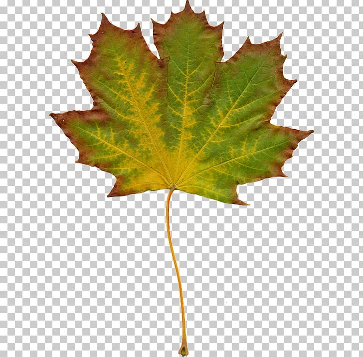 Autumn Leaf Color PNG, Clipart, Autumn, Autumn Leaf Color, Chlorophyll, Color, Desktop Wallpaper Free PNG Download