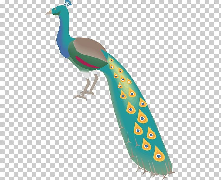 Indian Peafowl Bird Feather PNG, Clipart, Animals, Beak, Bird, Curtain, Drawing Free PNG Download