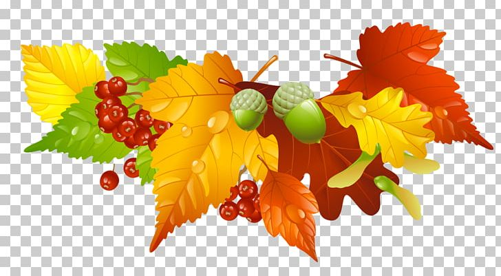 Autumn Leaf Color PNG, Clipart, Acorns, Autumn, Autumn Leaf Color, Autumn Leaves, Clip Art Free PNG Download