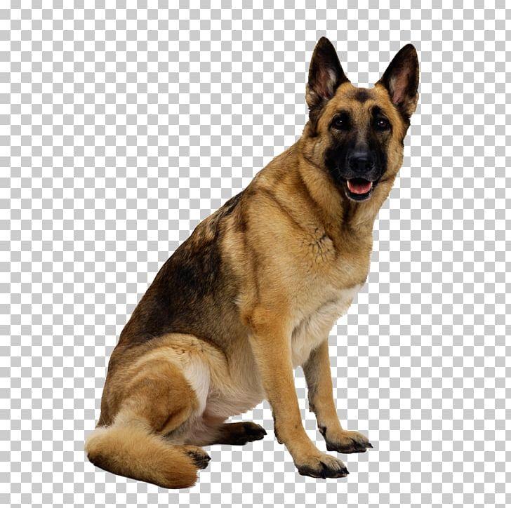 German Shepherd Australian Shepherd Bernese Mountain Dog