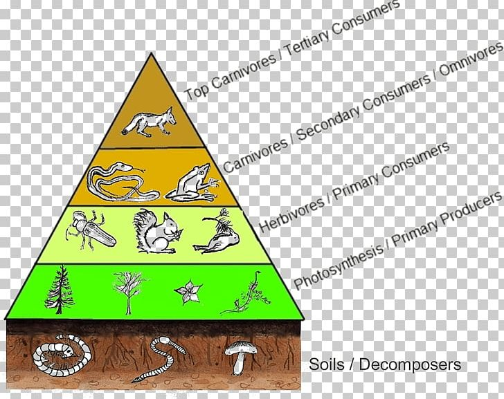 Trophic Level Food Web Food Chain Diagram Consumer Png  Clipart  Angle  Area  Biomass  Consumer