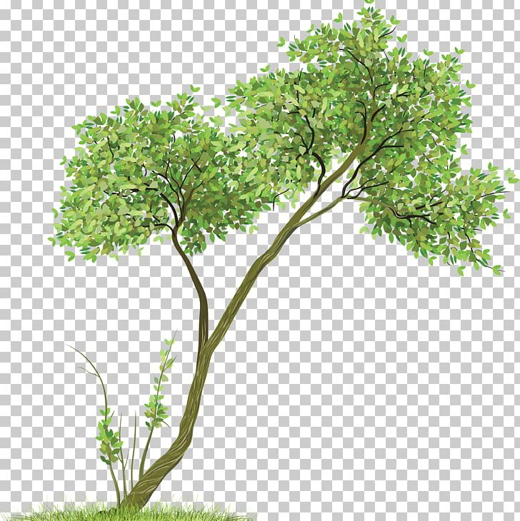 Tree PNG, Clipart, Tree Free PNG Download