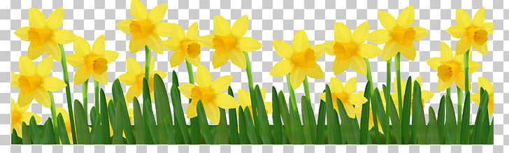 Daffodil PNG, Clipart, American Daffodil Society, Clip Art, Commodity, Computer Wallpaper, Daffodil Free PNG Download