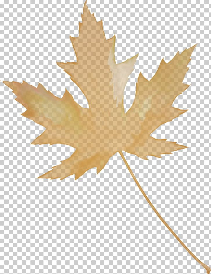 Maple Leaf Autumn Leaves PNG, Clipart, Autumn, Autumn Leaves, Flowering Plant, Leaf, Maple Free PNG Download