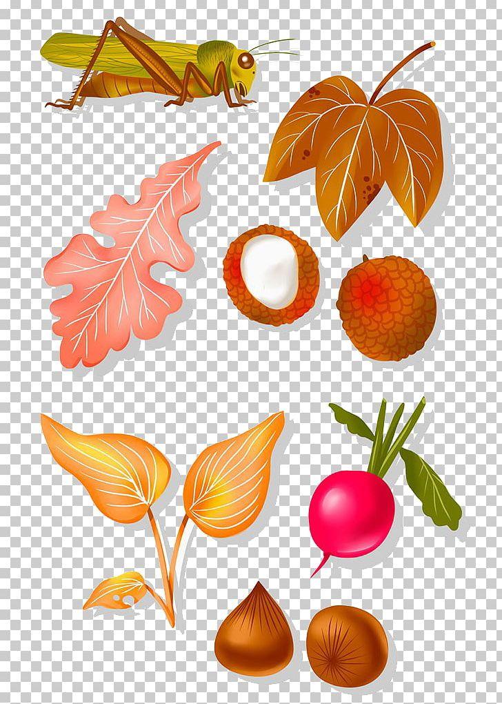 Lychee Fruit PNG, Clipart, Caelifera, Defoliation, Euclidean Vector