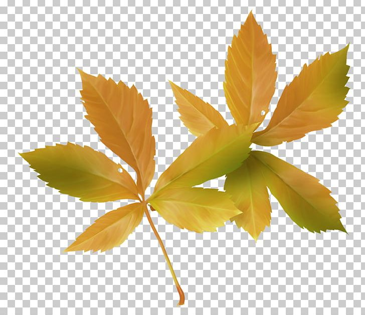 Maple Leaf Autumn PNG, Clipart, Autumn, Autumn Leaf Color, Autumn Leaves, Autumn Tree, Computer Wallpaper Free PNG Download