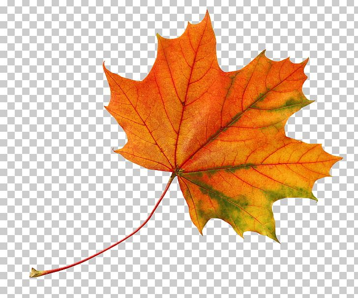 Leaf Autumn Leaves Color PNG, Clipart, Autumn, Autumn Leaf Color, Autumn Leaves, Color, Desktop Wallpaper Free PNG Download