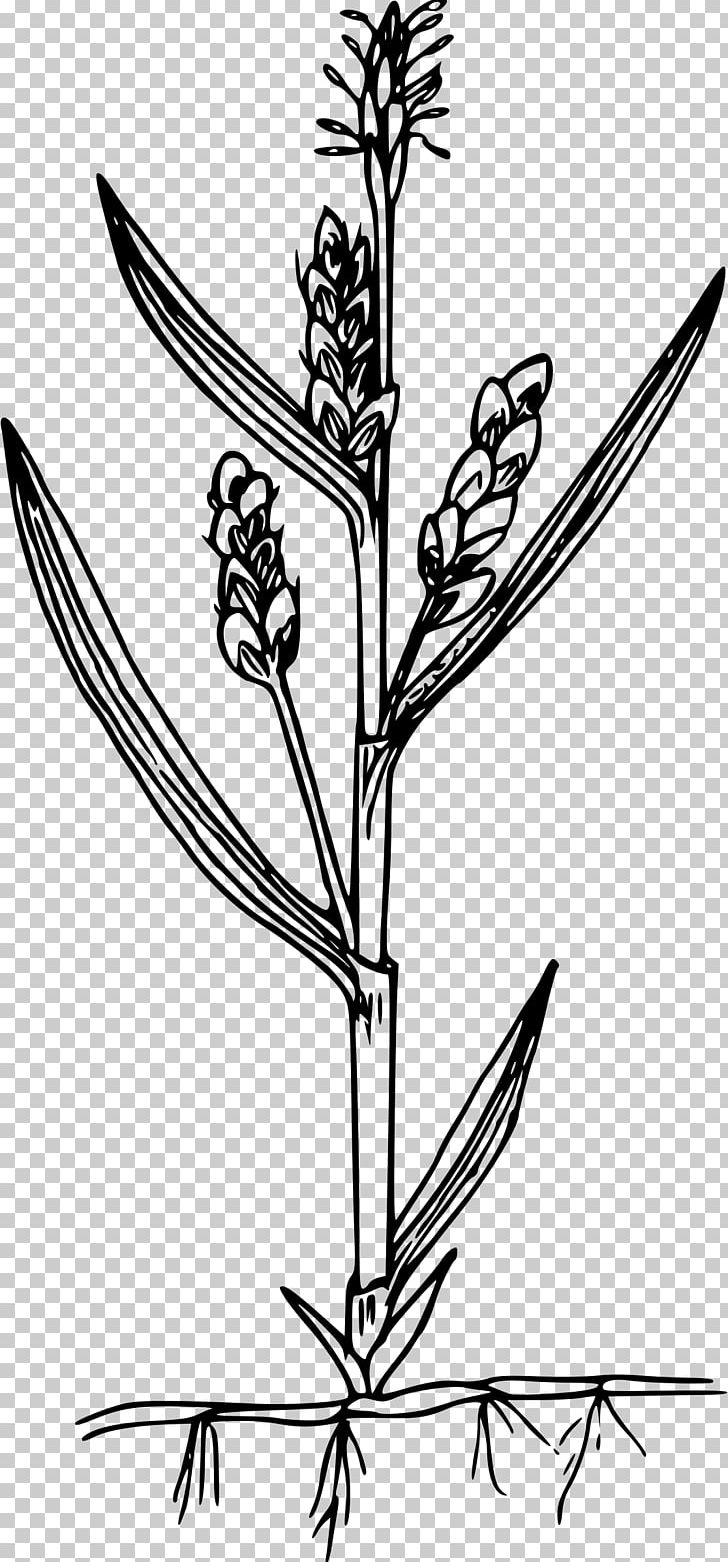 Flower PNG, Clipart, Bitki, Black And White, Branch, Download, Flora Free PNG Download