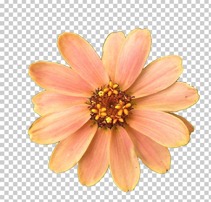 Flower Computer Icons PNG, Clipart, Chrysanths, Com, Computer Icons, Cut Flowers, Dahlia Free PNG Download