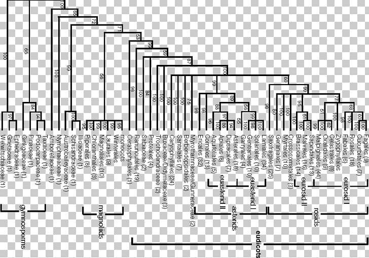 APG System Engler System Phylogenetics APG IV System APG III ...