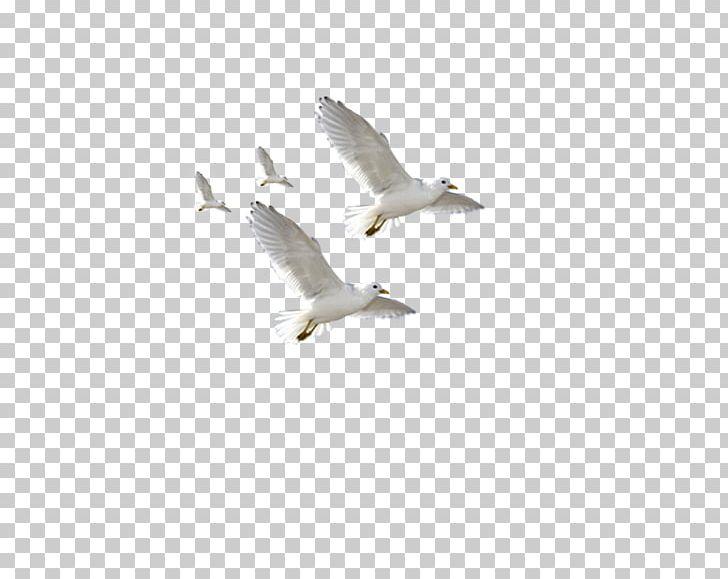 European Herring Gull Common Gull Flight Bird PNG, Clipart, Balloon