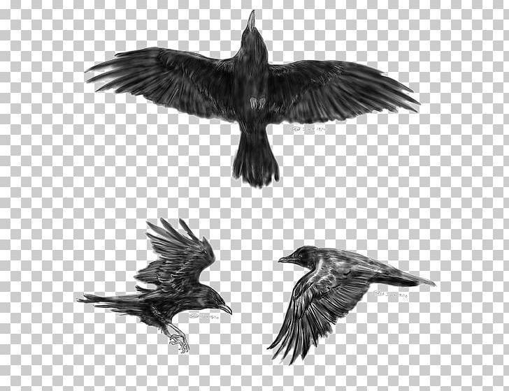 064699d82fcbe Common Raven Flight Tattoo Idea Little Crow PNG, Clipart, Accipitriformes,  Animals, Beak, Biomechanical Art, Bird Free PNG Download