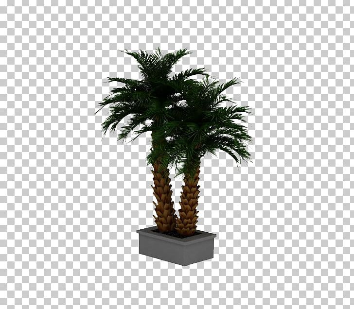 Date Palm Arecaceae 3D Computer Graphics Phoenix Roebelenii PNG