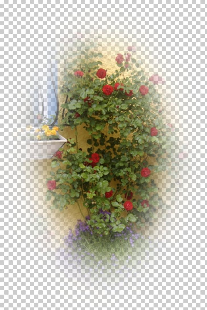 Floral Design Desktop Rose Family Petal Png Clipart Computer