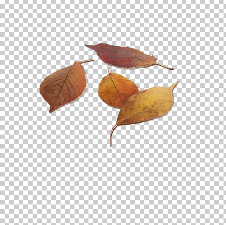 Leaf Autumn Deciduous PNG, Clipart, Art, Autumn, Autumn Leaves, Banana Leaves, Brown Free PNG Download