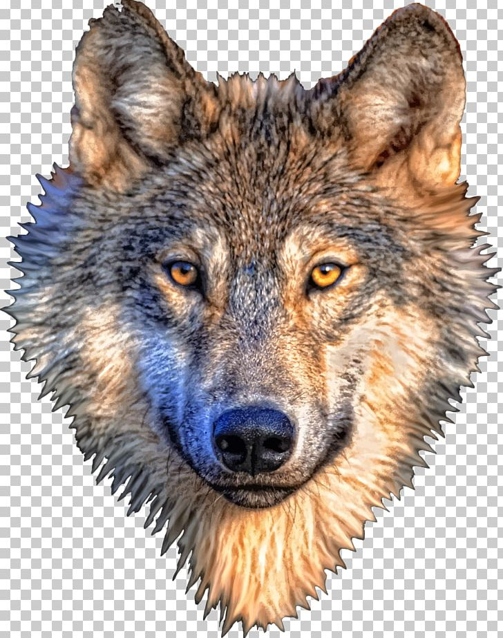 Gray Wolf T-shirt PNG, Clipart, Animal, Animals, Carnivoran, Computer Icons, Coyote Free PNG Download
